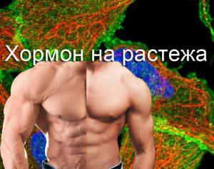 Генотип и хормон на растежа